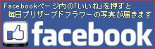 プリザーブドフラワー[フィサリス]Facebookページ