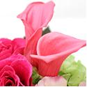 紫のバラの花言葉