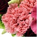 ピンクのバラの花言葉
